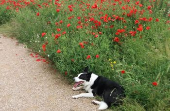 Dawn Boother Poppy The Poppies