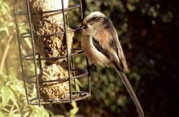 Mark Hogan - Long Tailed Tit