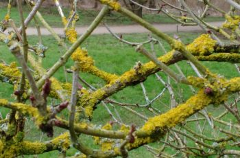 Sally Gray - Yellow Lichen